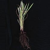 Roots 1 |  foto op dibond | 50 x 50 cm en 100 x 100 cm