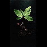 Roots 3 |  foto op dibond | 50 x 50 cm en 100 x 100 cm